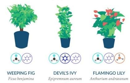 No Solo PPC: Aire limpio en la oficina gracias a tus plantas